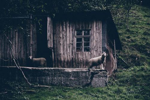 maison bois6