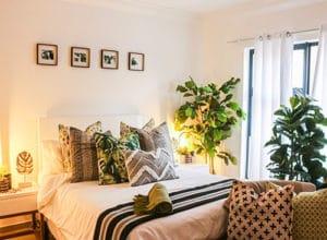 plante verte chambre